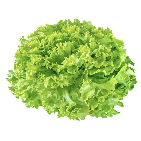 Salade Batavia - 1 pièce
