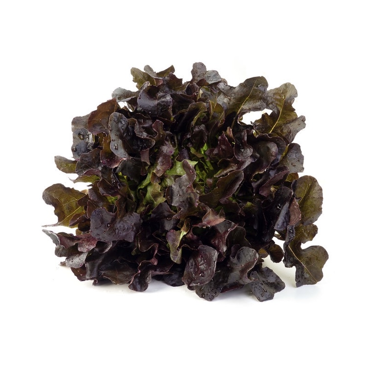 Salade Chêne rouge - 1 pièce