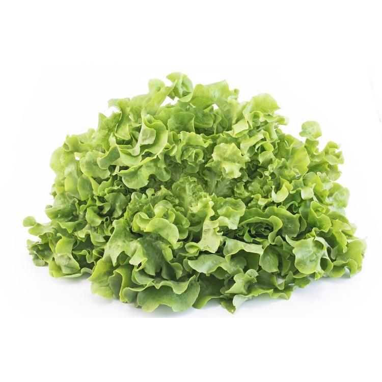 Salade Chêne verte - 1 pièce