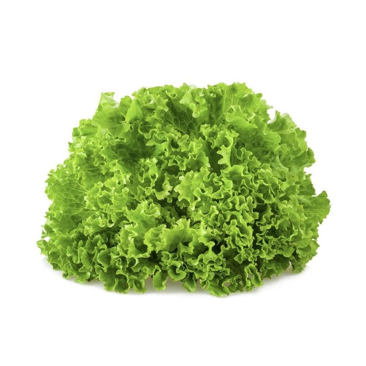 Salade Scarole frisée - 1 pièce